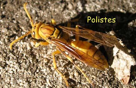 Classification des tres vivants reconna tre des insectes en classe de sixi me - Reconnaitre les insectes xylophages ...